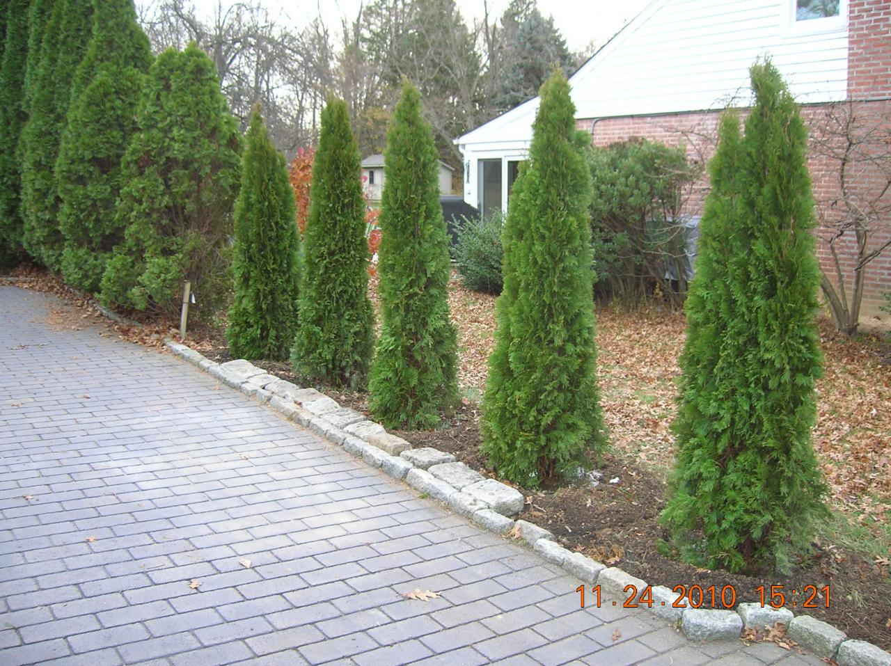 Andrew Vilcheck Trees And Shrub Planting
